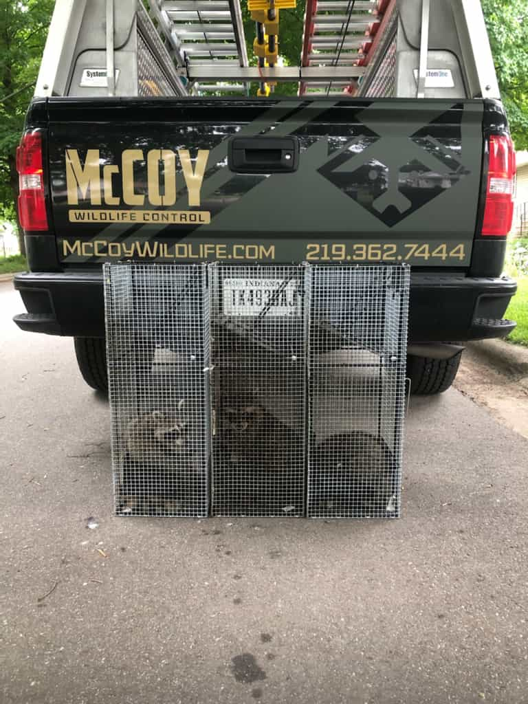 Residential & Commercial Wildlife Control Services Truck