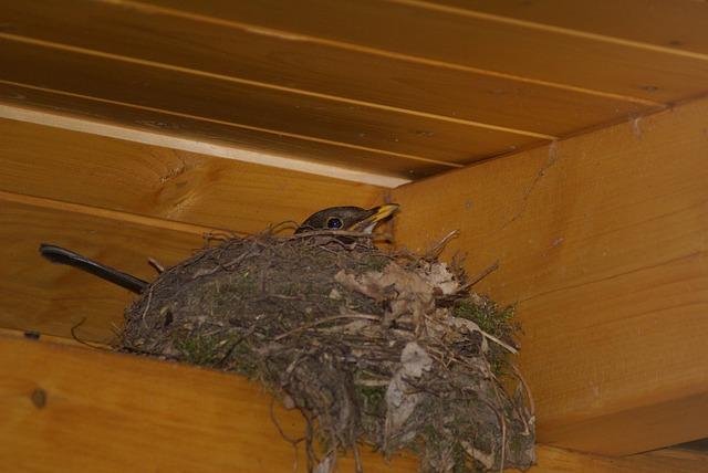 Bird (in nest) exclusion service